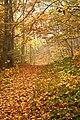 Autumn leaves on a trail (Unsplash).jpg