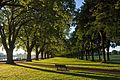 Avenue in Wandsworth Park in Summer.jpg