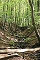 Axeltorps skogar 2020-3.jpg