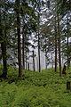 Babia Góra – las ponizej Przełęczy Brona 170.jpg