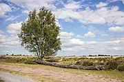 Balloërveld, natuurgebied in Drenthe 32.jpg