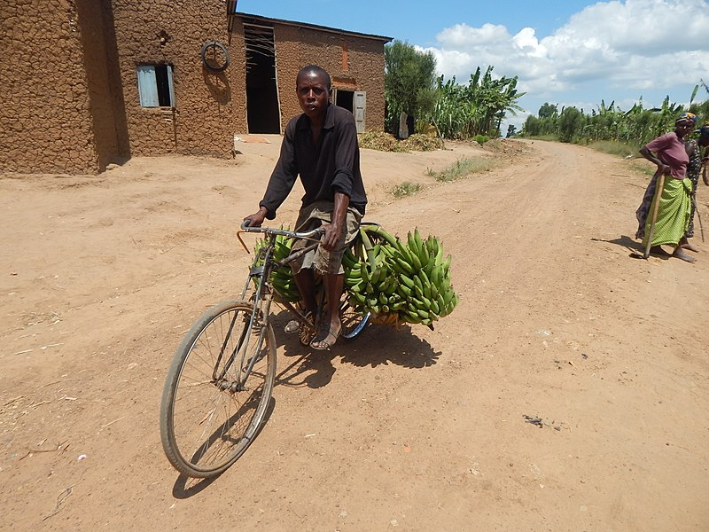 File:Banana Transportation on a Bicycle.jpg