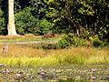Bangabandhu Safari Park Cox's Bazar 11.JPG
