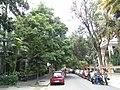 Bangalore Sanjay nagar street trees 2.jpg