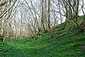 Bank around Castle Fort Ditches - geograph.org.uk - 384303.jpg