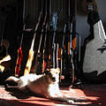 Barnyard-Blues-Dog in front of guitars.jpg