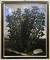 Bartolomeo bimbi, pianta di fave prodigiosa.JPG