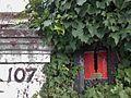 Battling Ivy (7596636728).jpg