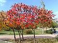 Beautiful autumn-Dimitrovgrad,Bulgaria - panoramio.jpg