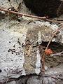Berlin mauer wein 17.04.2013 18-31-02.JPG