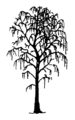 Betula pendula Silhouette (oddsock).png