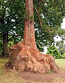 Big tree trunk.jpg