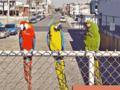 Birds VGA16.png
