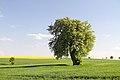 Birnbaum Hohbach 03.jpg