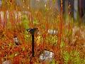 Black mushroom (5604013187).jpg