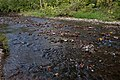Blacklick Woods-Blacklick Creek 1.jpg