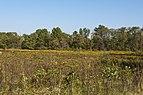 Blacklick Woods Meadows 1.jpg