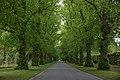 Blair Castle entrance avenue 2017-05-27.jpg