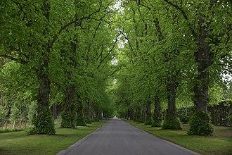 Blair Castle - The entrance avenue to Blair Castle