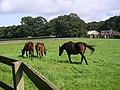 Bloodstock, Whitsbury Manor Stud - geograph.org.uk - 962926.jpg