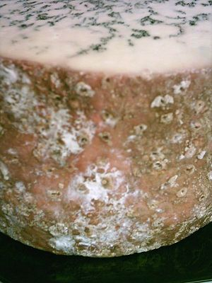 Melton Mowbray - The round corner of a blue Stilton cheese, made in the traditional cylindrical shape.