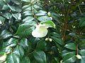 Blume im Regen (12460805245).jpg
