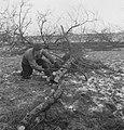 Bosbewerking, arbeiders, boomstammen, gereedschappen, Bestanddeelnr 251-7784.jpg