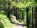 Bosque de Oma (31).JPG