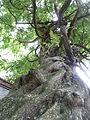 BotanicGardensPisa (23).JPG