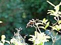 Botanischer-garten-ffm021.jpg