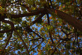 Branches and Leaves (3753828002).jpg