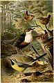 Brehms Tierleben; allgemeine kunde des thierreichs. Mit 1910 abbildungen im text, 11 karten und 180 tafeln in farbendruck und holzschnitt. (1893) (14782241834).jpg