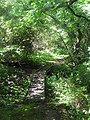 Bridge in the woods - Morwenstow - August 2011 - panoramio.jpg