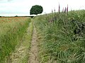 Bridleway to Mollyhurst Lane - geograph.org.uk - 471856.jpg