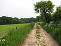 Bridleway to River Ant - geograph.org.uk - 813029.jpg