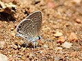 Bright babul blue 3.jpg