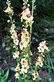 Bright mountain flowers (25198994214).jpg