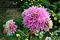 Brinjal colour flower.jpg