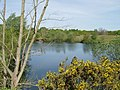 Broome Gravel Pits - geograph.org.uk - 349079.jpg