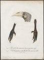 Buceros coronatus - kop en poot - 1801 - Print - Iconographia Zoologica - Special Collections University of Amsterdam - UBA01 IZ19300194.tif