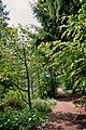 Buchholzer Forst Waldweg.jpg