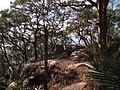 Bullimah Spur - panoramio (2).jpg