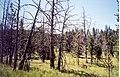 Burned over 1990 Central plateau.jpg