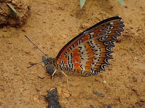 Butterfly near Muang Ngoi Neua.jpg