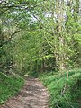 Byway Approaching Wooton, Shropshire - geograph.org.uk - 408927.jpg