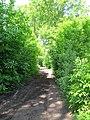 Byway in Oldbury Woods - geograph.org.uk - 1321148.jpg