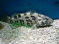 Cá mú Nha Trang 2.jpg