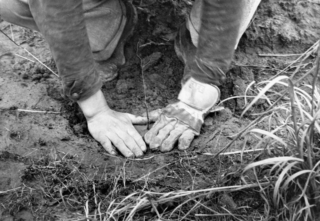 CCC-Tennessee-Tree-Planting