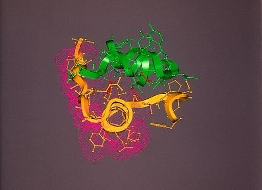 CSIRO ScienceImage 355 Representation of Insulin Structure