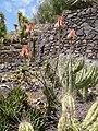 Cactaceae - Oasis Park botanical garden - Fuerteventura - 04.jpg